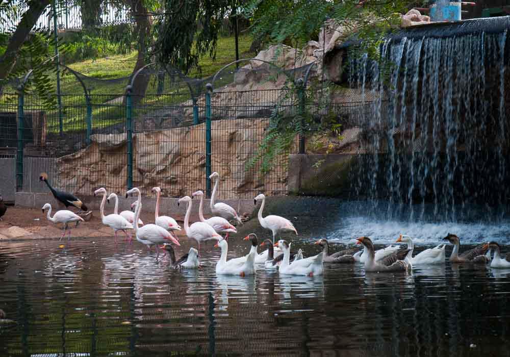 travel-to-agadir-Vallee-des-Oiseaux