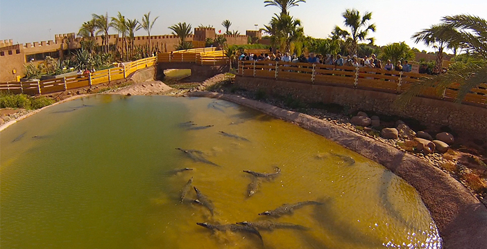 travel-to-agadir-crocopark